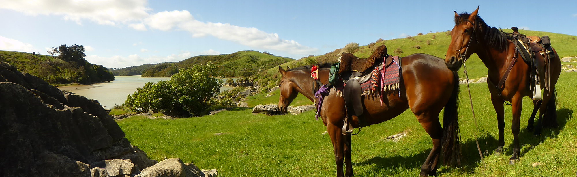 Horse Riding, Raglan Harbour, Waikato New Zealand.